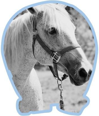 Cheval - Ranch des Petits Amis