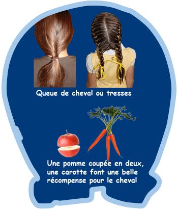 Carotte ou pomme pour le cheval - Ranch des petits amis - Ste-Hélène-de-Bagot - Équitation - Quarter Horse - Poney - Cours d'équitation - Équi-Qualité